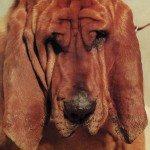 Crítica de Goodbye Bread de Ty Segall | HTM